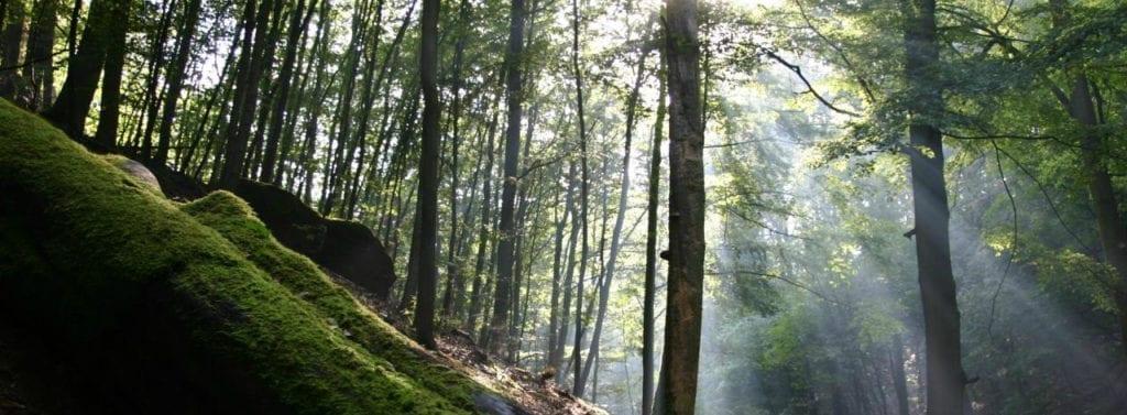 Au royaume de la forêt